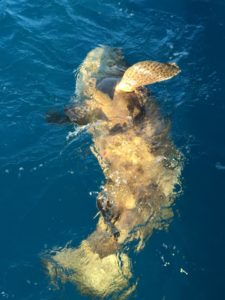 Islamorada January fishing Goliath grouper
