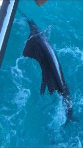 December fishing in Islamorada