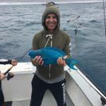 Islamorada parrot fish