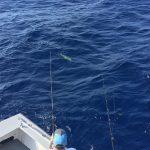 Islamorada October fishing dolphin